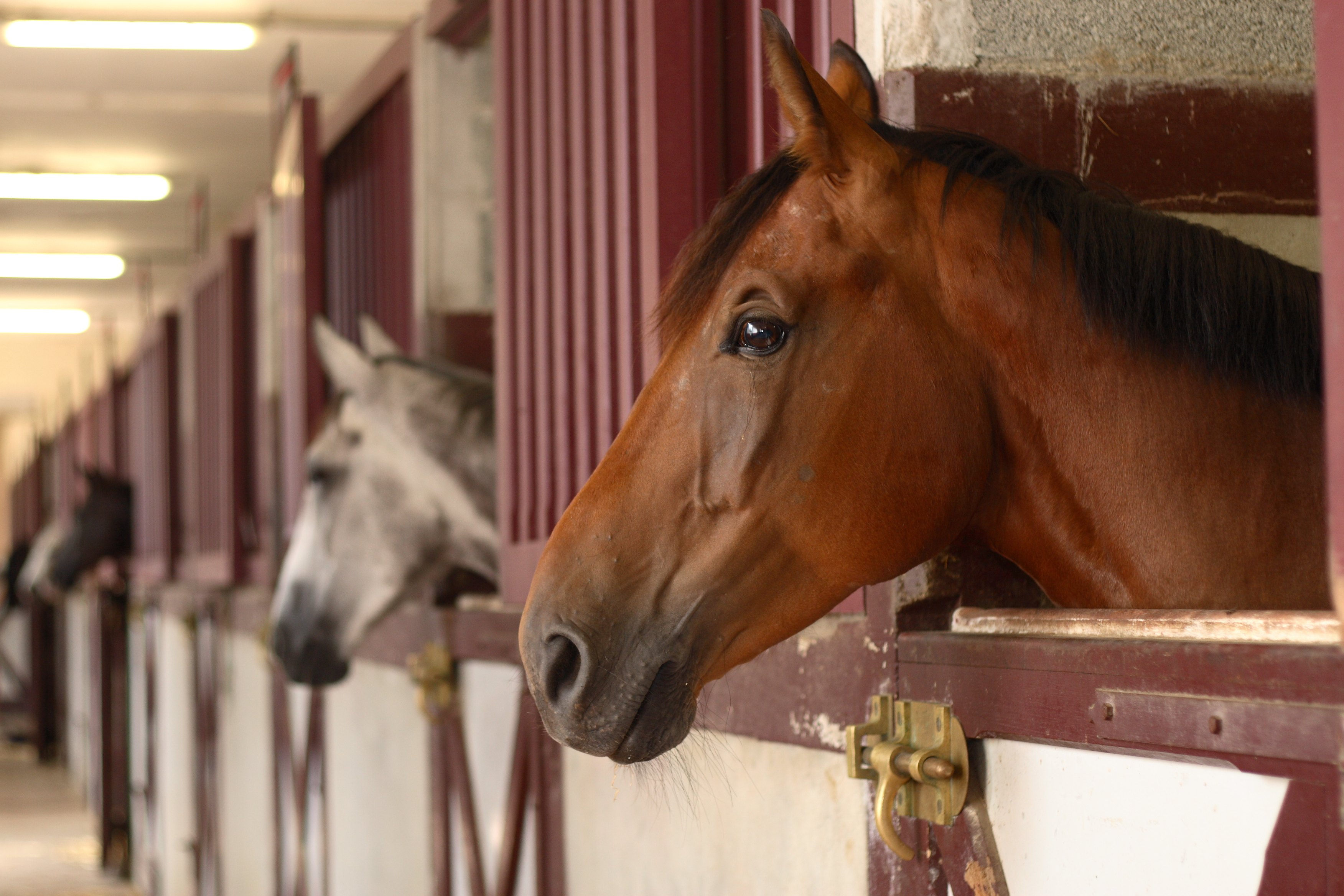 Rubber & Stable Matting for Equine Applications from Quattro