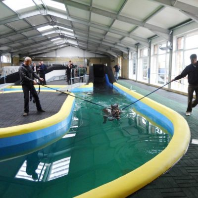 q/tyle-equine-pool-paint-protection-coating
